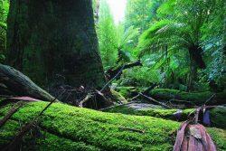 Wilderness Tours - Rain Forest - Pepper Bush Adventures