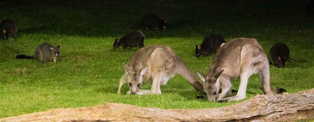 Tasmanian wildlife viewing