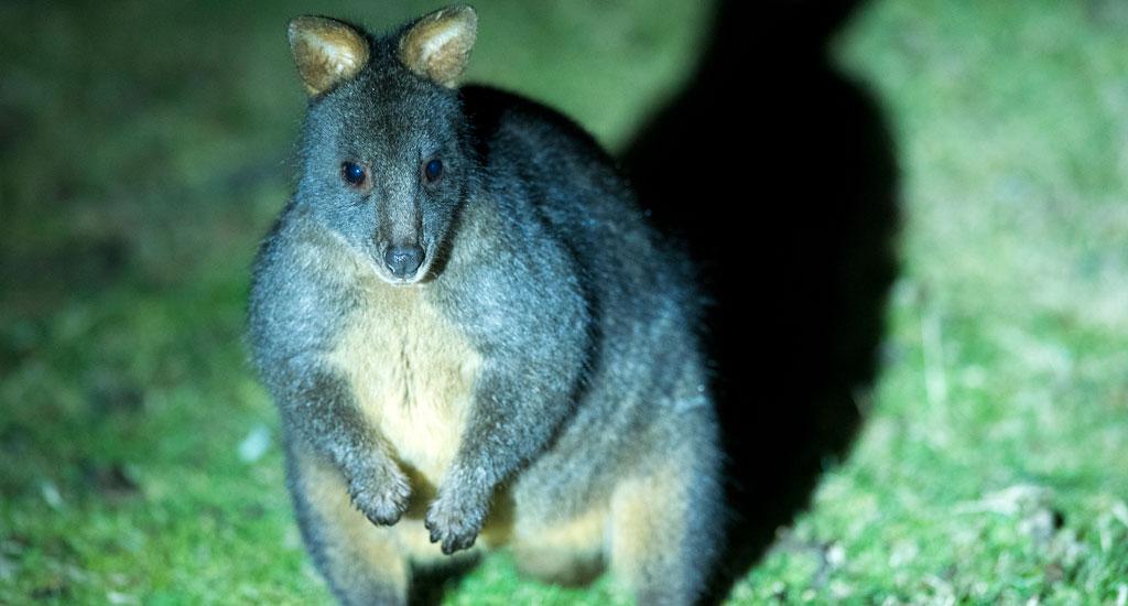 tasmanian wildlife tours