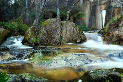 tasmanian day tours