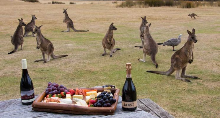 Tasmania tour, Tasmanian tour, food and wine tours
