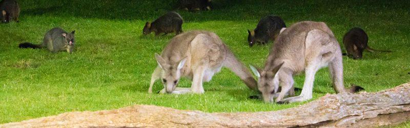 tasmania itinerary 10 days