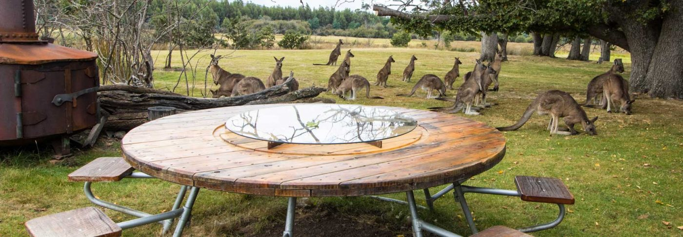 coming to tasmania